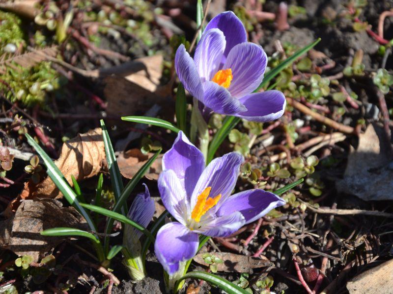 Jahreskreisfest: Frühlings-Äquinox